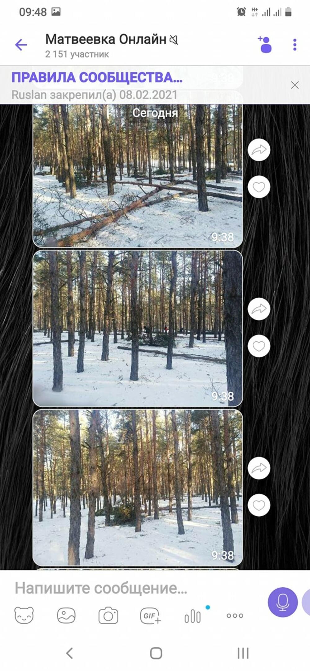 Вырубка и вывоз деревьев, Вырубка деревьев в Матвеевском урочище