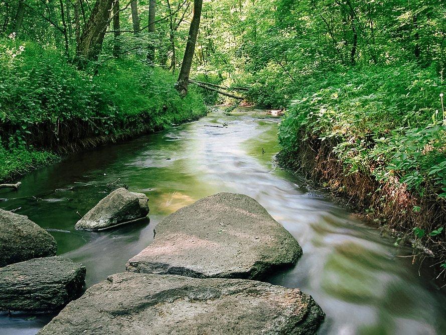 Река в лесу