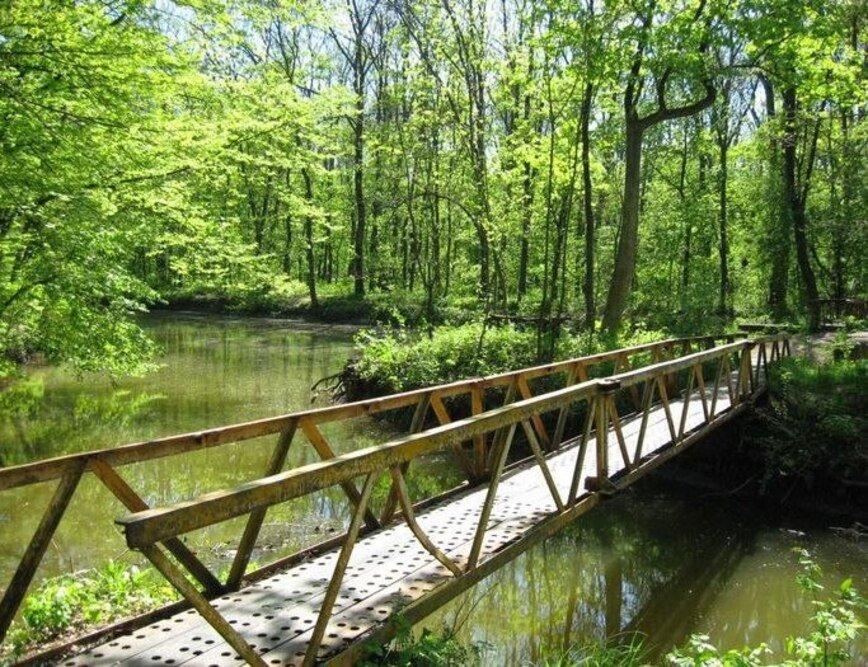 Мост в Трикратском лесу