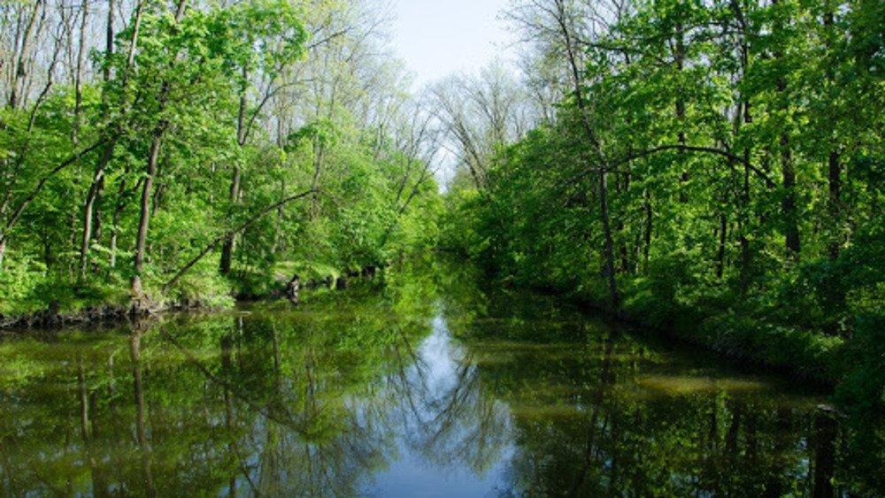 Лес в селе Трикраты