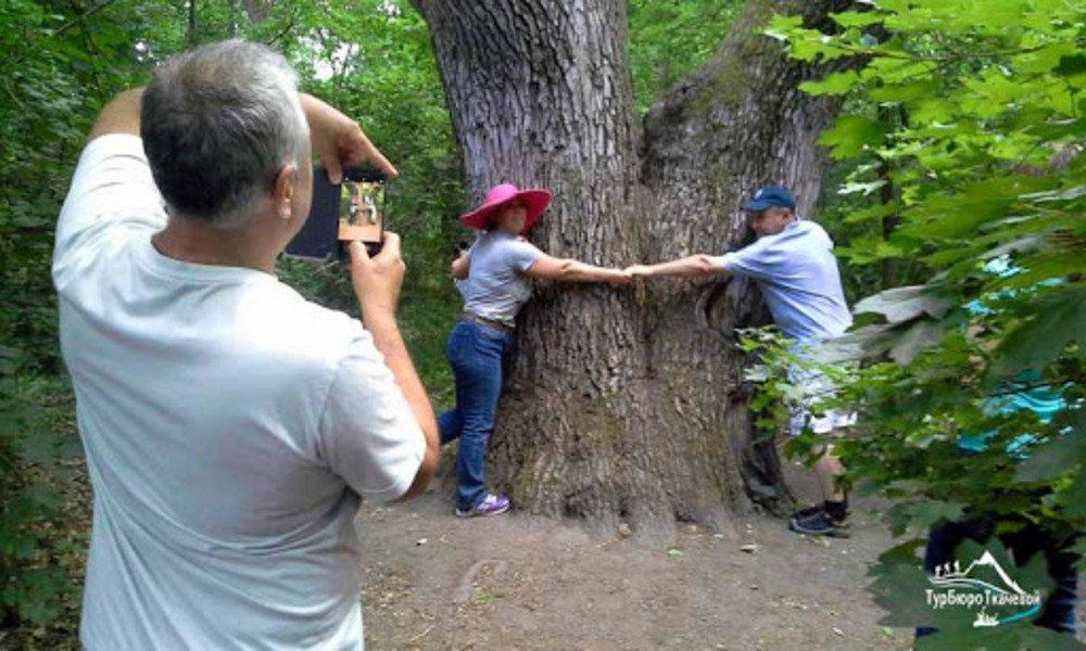 Обнять дуб любви
