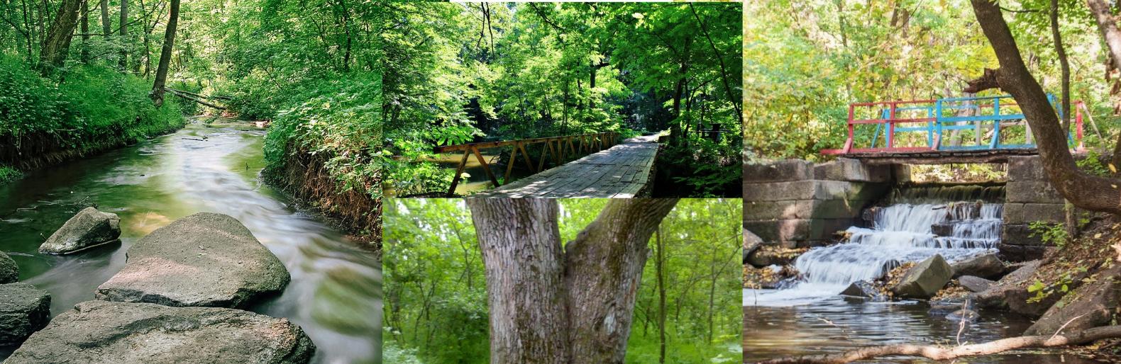 Дуб любви, столетние деревья, рукотворные реки и водопад: история леса на Николаевщине,- ФОТО