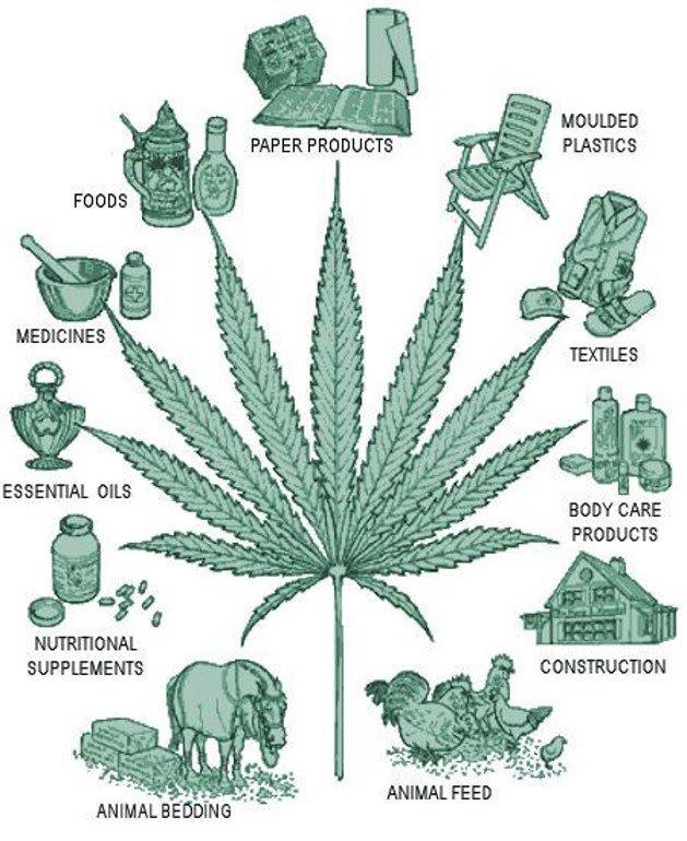 Что делают из марихуаны рисованная конопля